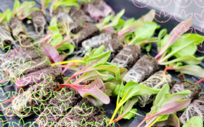 Wiseacre Farm and the Future of Food